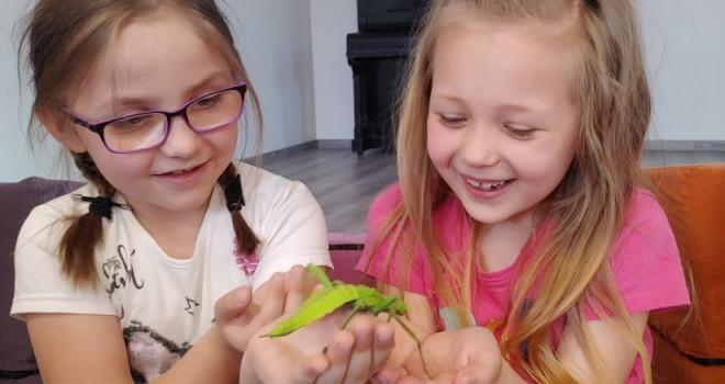 Pokaz owadów
