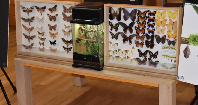 Pokaz motyli